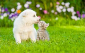 ペットの悩み 愛犬 吠える